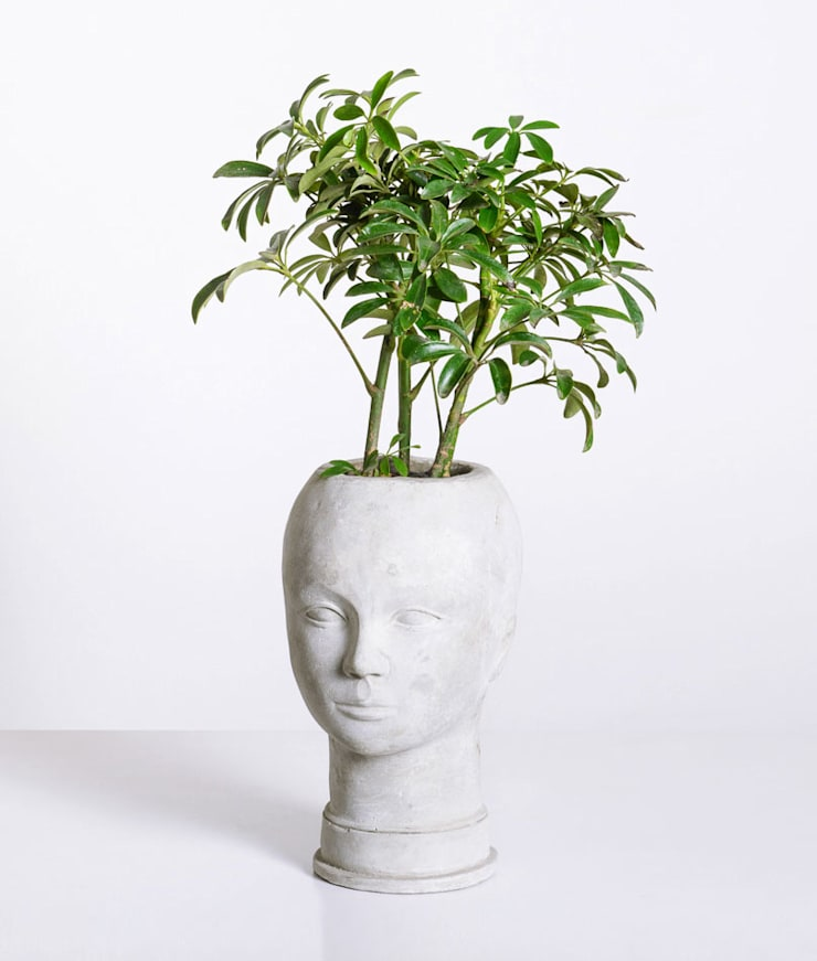 Cabeza cemento:  de estilo tropical por TopList, Tropical Piedra