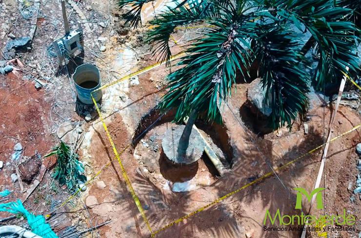 Trasplante de árboles:  de estilo  por Monteverde Ltda