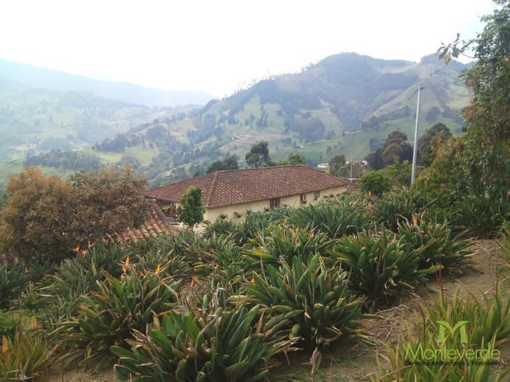 Siembra de Aves de Paraiso:  de estilo  por Monteverde Ltda