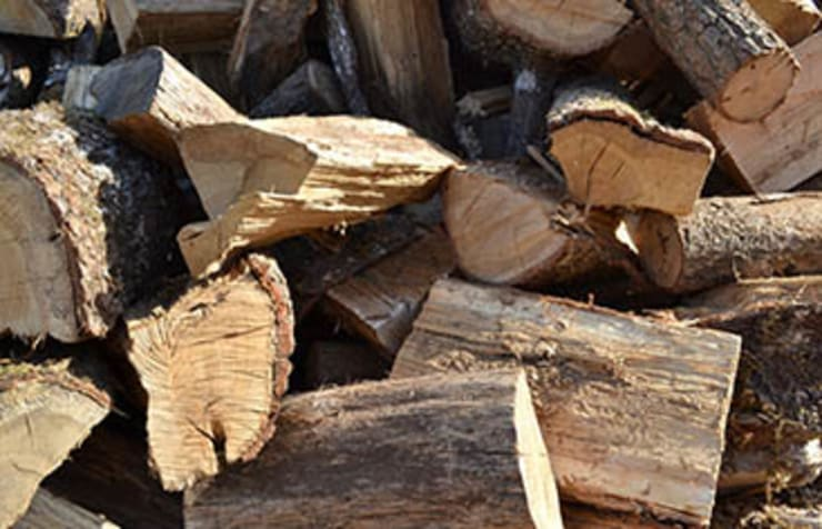 de estilo  de Tree Felling Pretoria