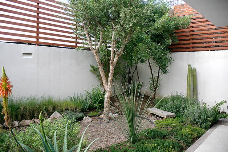 Campestre 545, Querétaro.: Jardines de piedra de estilo  por Hábitas