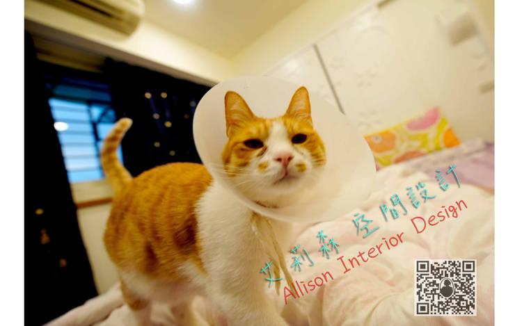 業主家的貓~應該不用介紹:  藝術品 by 艾莉森 空間設計