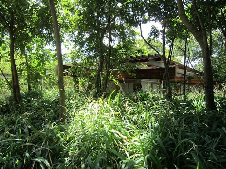 Vorgarten von Van der Merwe Miszewski Architects, Modern Holz Holznachbildung