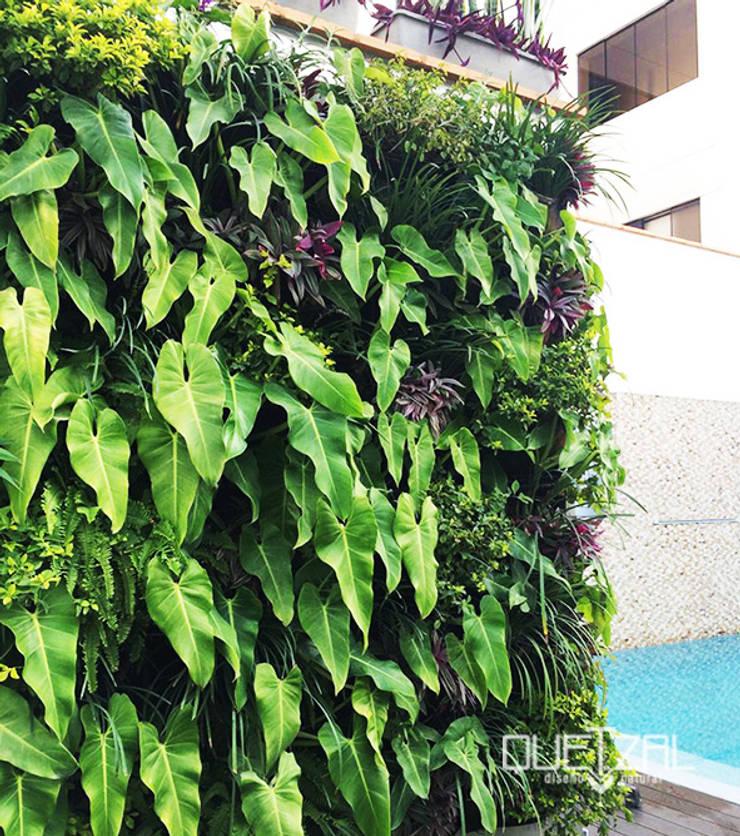 Piscinas de estilo moderno por Quetzal Jardines