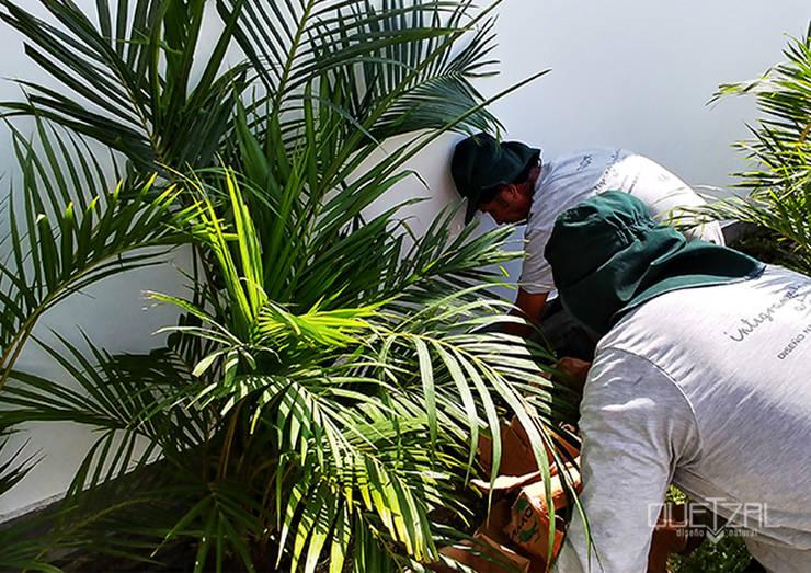 Mantenimiento e instalación de áreas verdes: Jardines de estilo  por Quetzal Jardines