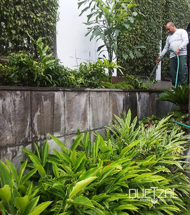 Mantenimiento e instalación de áreas verdes: Jardines en la fachada de estilo  por Quetzal Jardines