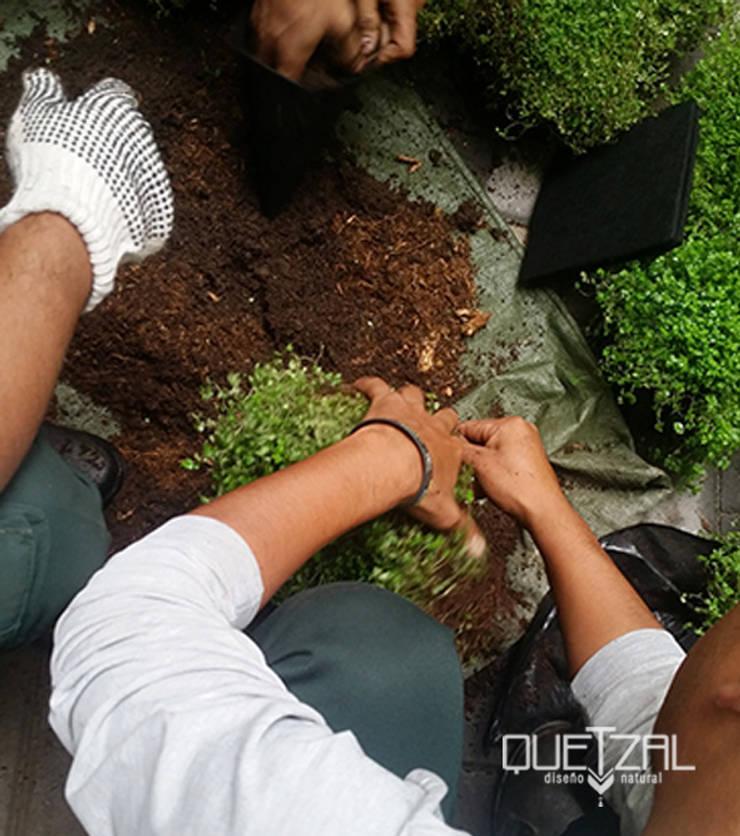 Mantenimiento e instalación de áreas verdes: Jardines de piedra de estilo  por Quetzal Jardines