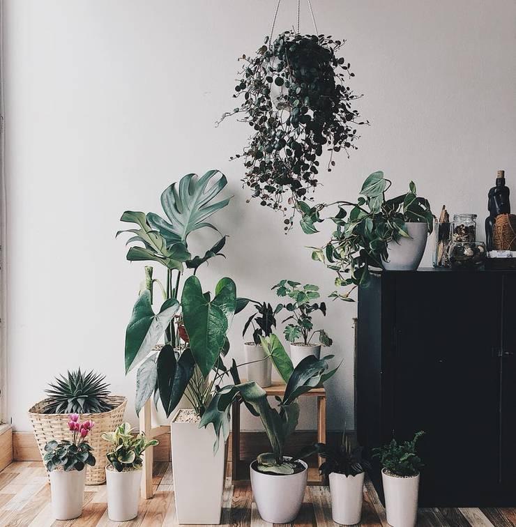 Decoración vegetal para residencia :  de estilo  por Marga, Moderno Cerámica