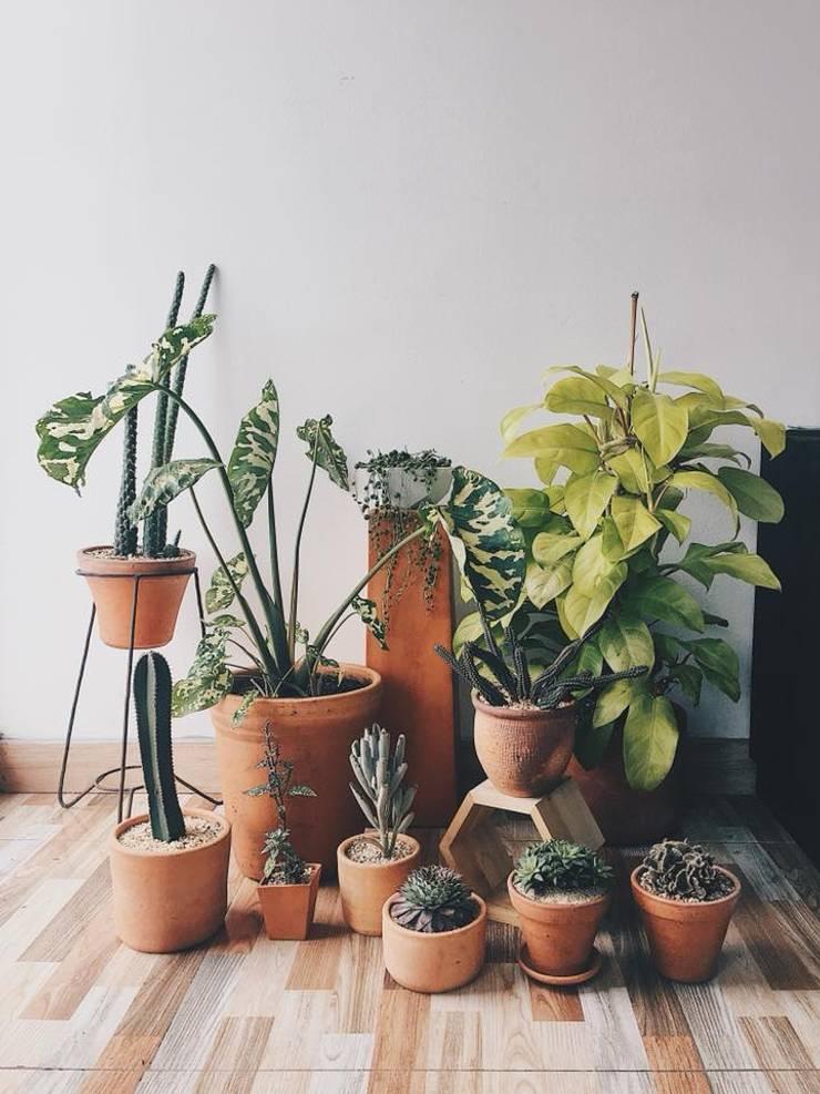 Decoración vegetal para residencia :  de estilo  por Marga, Moderno Cerámico