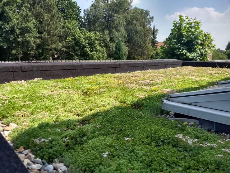 Groendak:  Plat dak door Bolier Ontwerp & Bouwregie, Modern