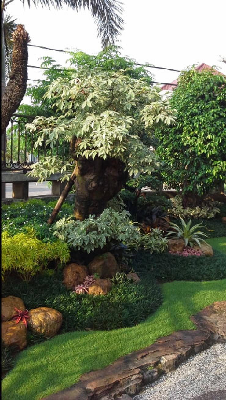 taman halaman depan rumah:  Garden  by TUKANG TAMAN SURABAYA - jasataman.co.id