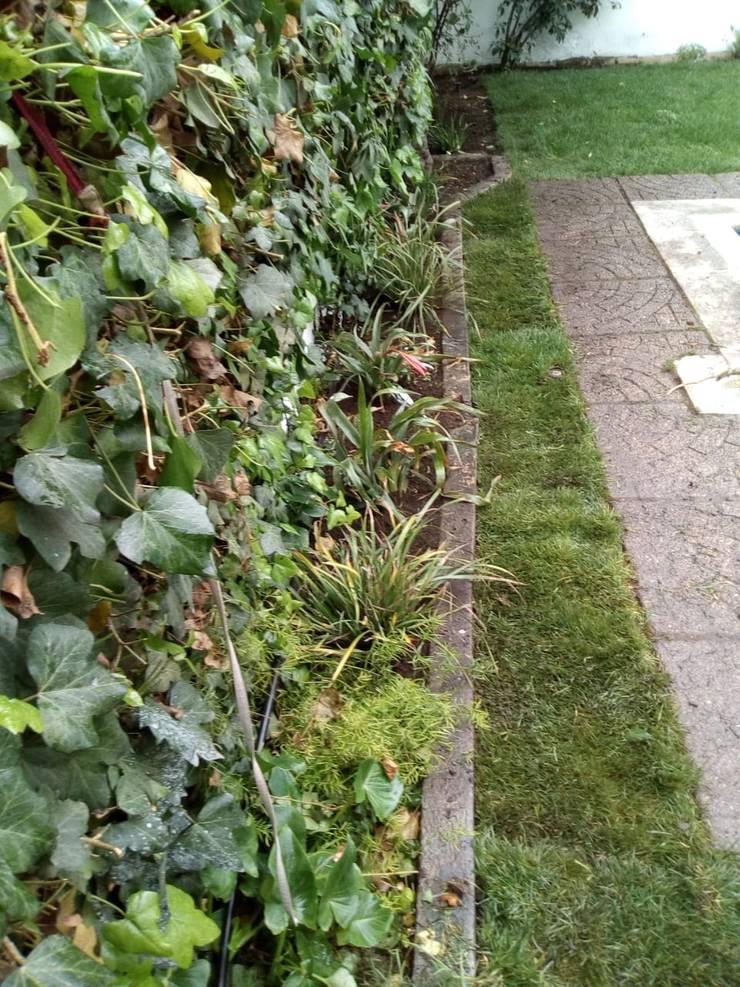 Jardín de lavandas : Jardines de estilo rústico por Agroinnovacion paisajismo sustentable