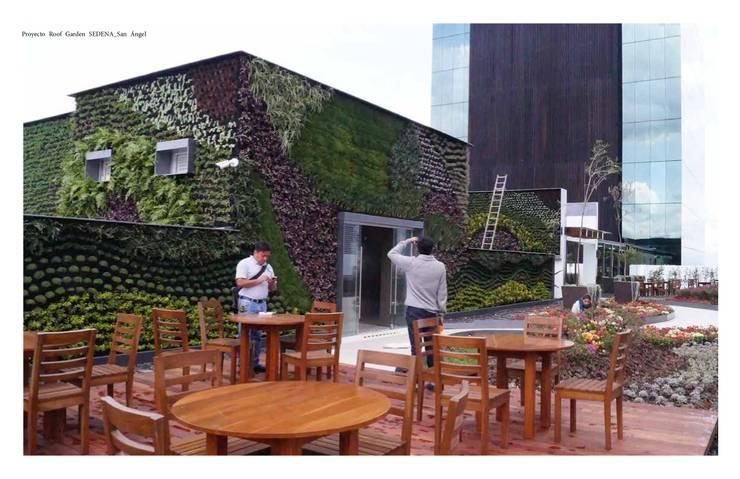 Roof Garden San Angel: Jardines de estilo  por Designo Arquitectos