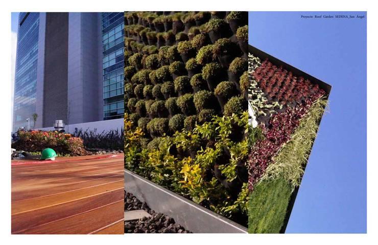 Detalles de Roof Garden: Jardines de estilo  por Designo Arquitectos