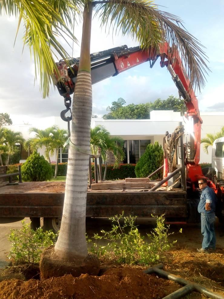Trasplantes de Palmas: Jardines de estilo  por Globo Natural