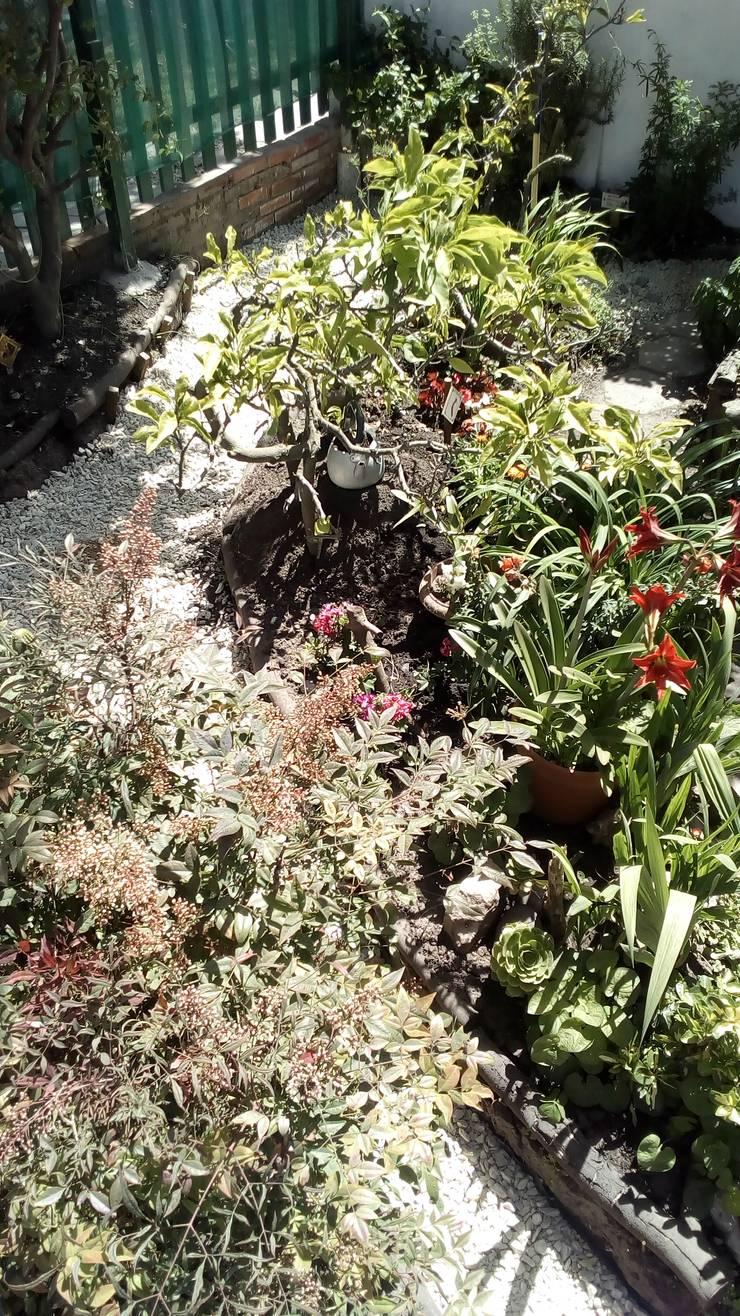 Vista general de la intervención: Jardines con piedras de estilo  por DUSINSKY S.A.,
