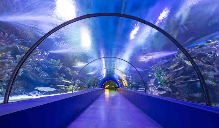 plexiglas acryl aquarium nach mass aquariumbau sonderanfertigungen