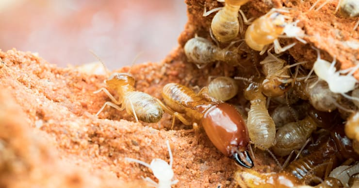 """Termite Control Solutions: {:asian=>""""asian"""", :classic=>""""classic"""", :colonial=>""""colonial"""", :country=>""""country"""", :eclectic=>""""eclectic"""", :industrial=>""""industrial"""", :mediterranean=>""""mediterranean"""", :minimalist=>""""minimalist"""", :modern=>""""modern"""", :rustic=>""""rustic"""", :scandinavian=>""""scandinavian"""", :tropical=>""""tropical""""}  by Solid Hygiene Solutions Cape Town,"""