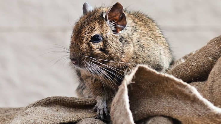 """Rodent Prevention Solutions: {:asian=>""""asian"""", :classic=>""""classic"""", :colonial=>""""colonial"""", :country=>""""country"""", :eclectic=>""""eclectic"""", :industrial=>""""industrial"""", :mediterranean=>""""mediterranean"""", :minimalist=>""""minimalist"""", :modern=>""""modern"""", :rustic=>""""rustic"""", :scandinavian=>""""scandinavian"""", :tropical=>""""tropical""""}  by Solid Hygiene Solutions Cape Town,"""