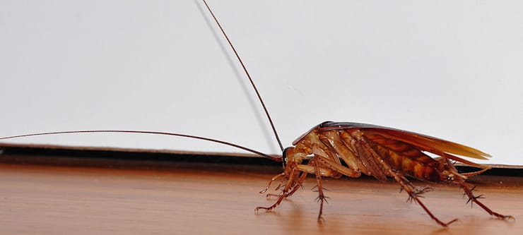 """Cockroach Treatment Services: {:asian=>""""asian"""", :classic=>""""classic"""", :colonial=>""""colonial"""", :country=>""""country"""", :eclectic=>""""eclectic"""", :industrial=>""""industrial"""", :mediterranean=>""""mediterranean"""", :minimalist=>""""minimalist"""", :modern=>""""modern"""", :rustic=>""""rustic"""", :scandinavian=>""""scandinavian"""", :tropical=>""""tropical""""}  by Solid Hygiene Solutions Cape Town,"""