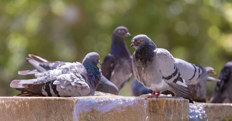 Cost-effective Bird Control :   by Pest Managers Cape Town