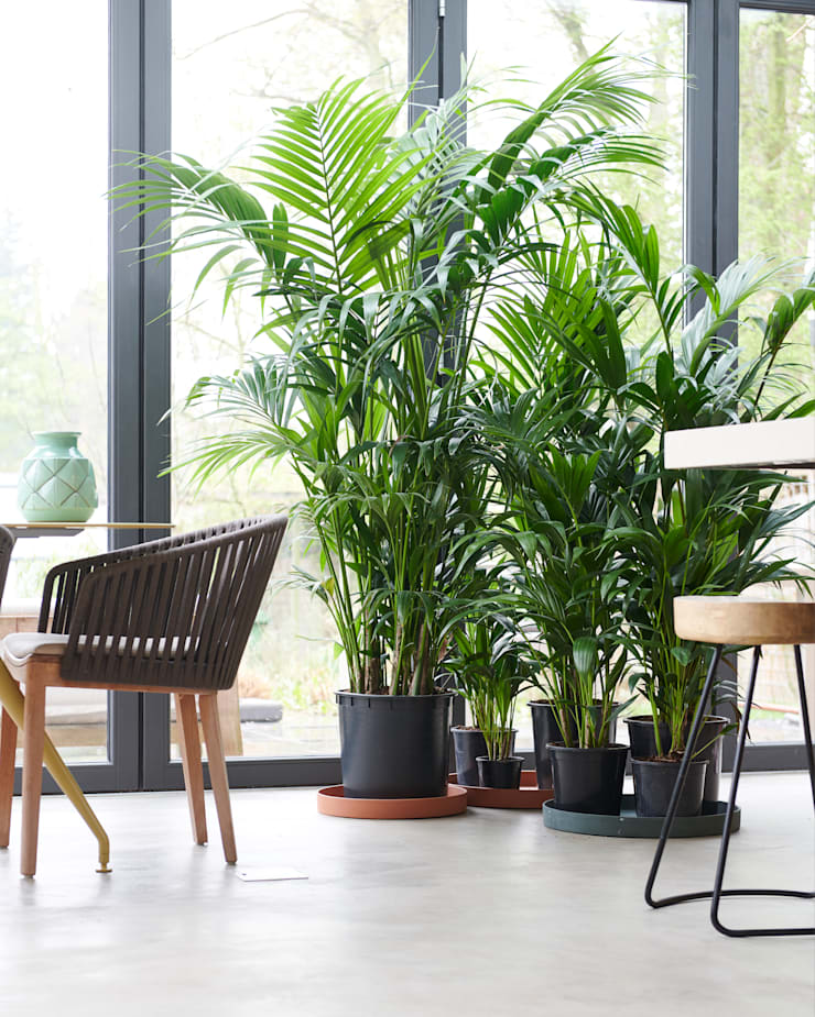 Zimmerpflanze Des Monats Januar 2019 De Pflanzenfreude De Homify