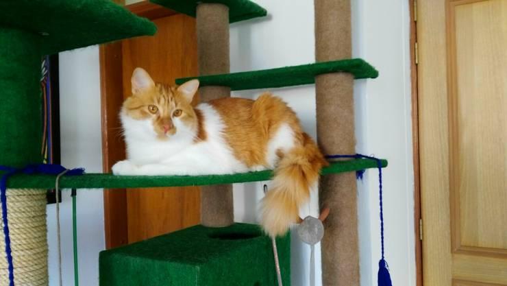Gimnasio para gatos, referencia Amazonas: Hogar de estilo  por ModuCat Estructuras modulares para gatos