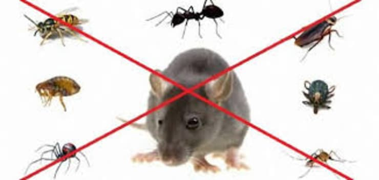 شركة مكافحة حشرات شمال االرياض0507719298:   تنفيذ شركة تنظيف ومكافحة حشرات ونقل عفش شمال الرياض0507719298