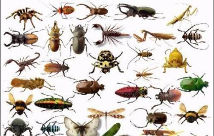 شركة مكافحة حشرات واسط الرياض0507719298:   تنفيذ شركة تنظيف ومكافحة حشرات ونقل عفش شمال الرياض0507719298