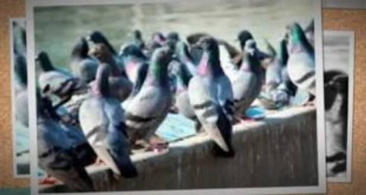 طارد الحمام شمال الرياض0507719298:   تنفيذ شركة تنظيف ومكافحة حشرات ونقل عفش شمال الرياض0507719298