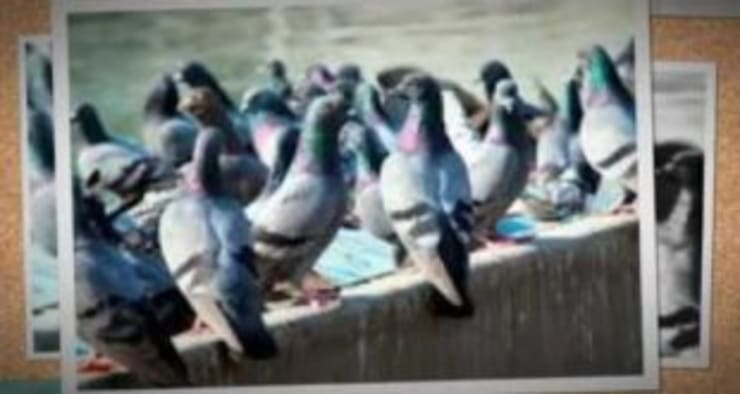 شركة تركيب طارد حمام بالرياض0507719298:   تنفيذ شركة تنظيف ومكافحة حشرات ونقل عفش شمال الرياض0507719298