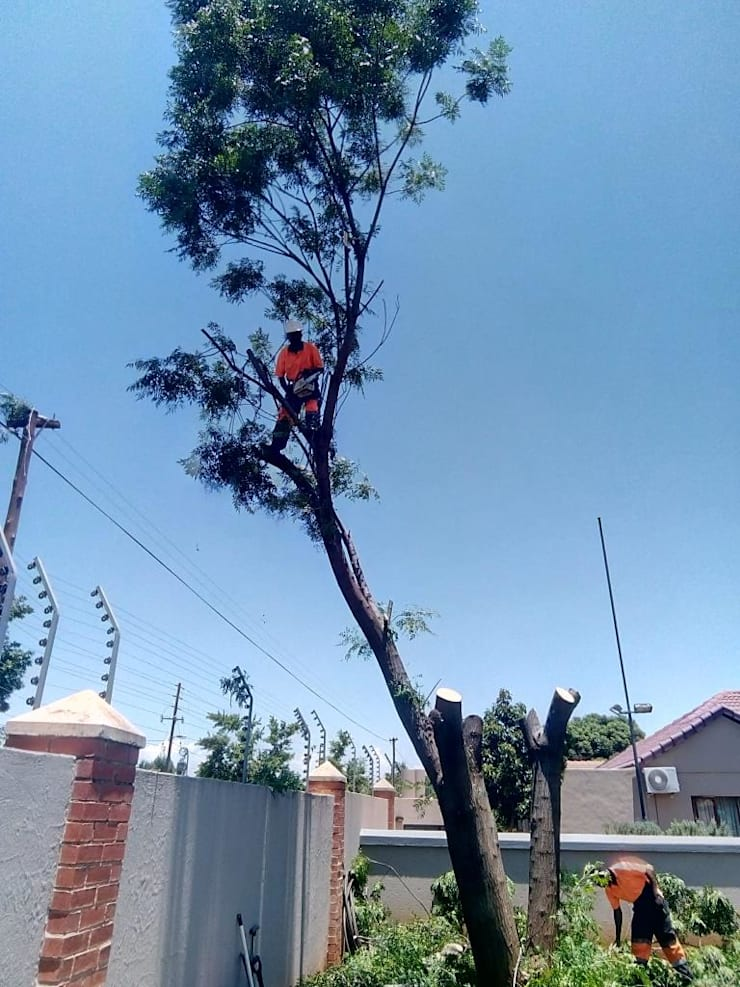 Tree Felling Services: industrial  by Tree Felling Group, Industrial