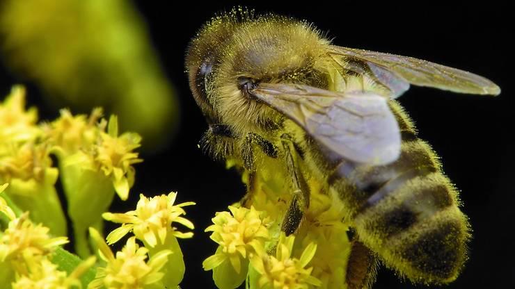 Biodiversität im Garten: der naturnahe Garten:   von Ecologic City Garden - Paul Marie Creation