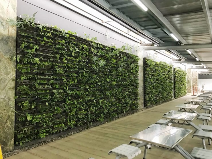 Jardin Vertical con Sistema Cangurü: Jardines frontales de estilo  por Helecho SAS