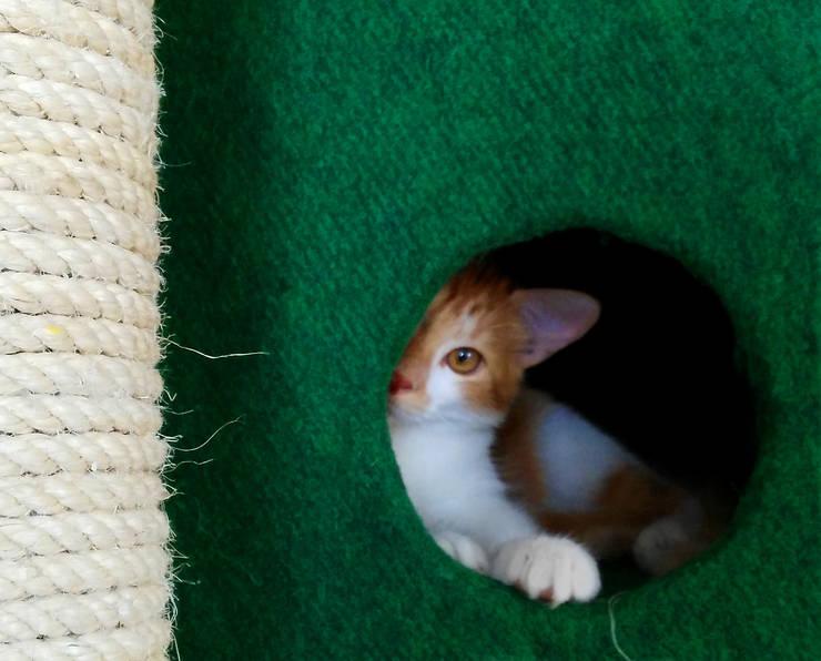 Gimnasio para gatos, referencia Amazonas: Hogar de estilo  por ModuCat Estructuras modulares para gatos,