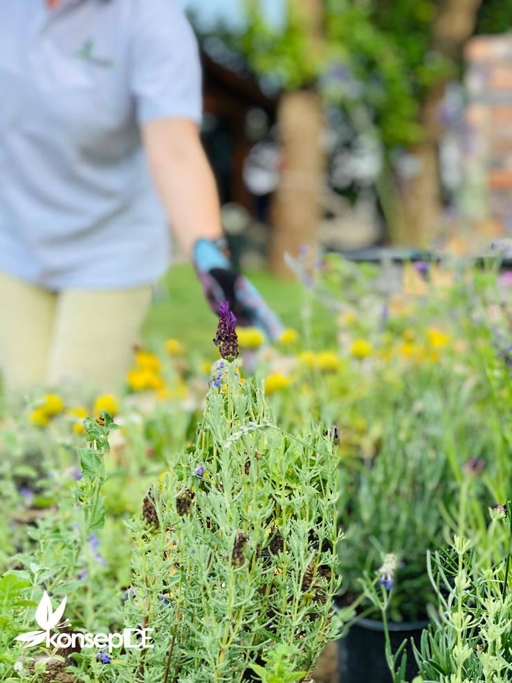 konseptDE Peyzaj Fidancılık Tic. Ltd. Şti. – ÖZEL KONUT Aromatik Bahçe Uygulama:  tarz Bahçe,