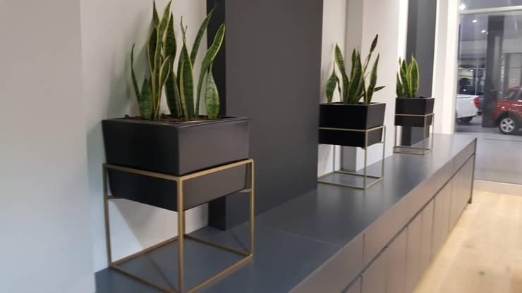 PlantHAUS Quartz 35: minimalist  by PlantHAUS, Minimalist Synthetic Brown