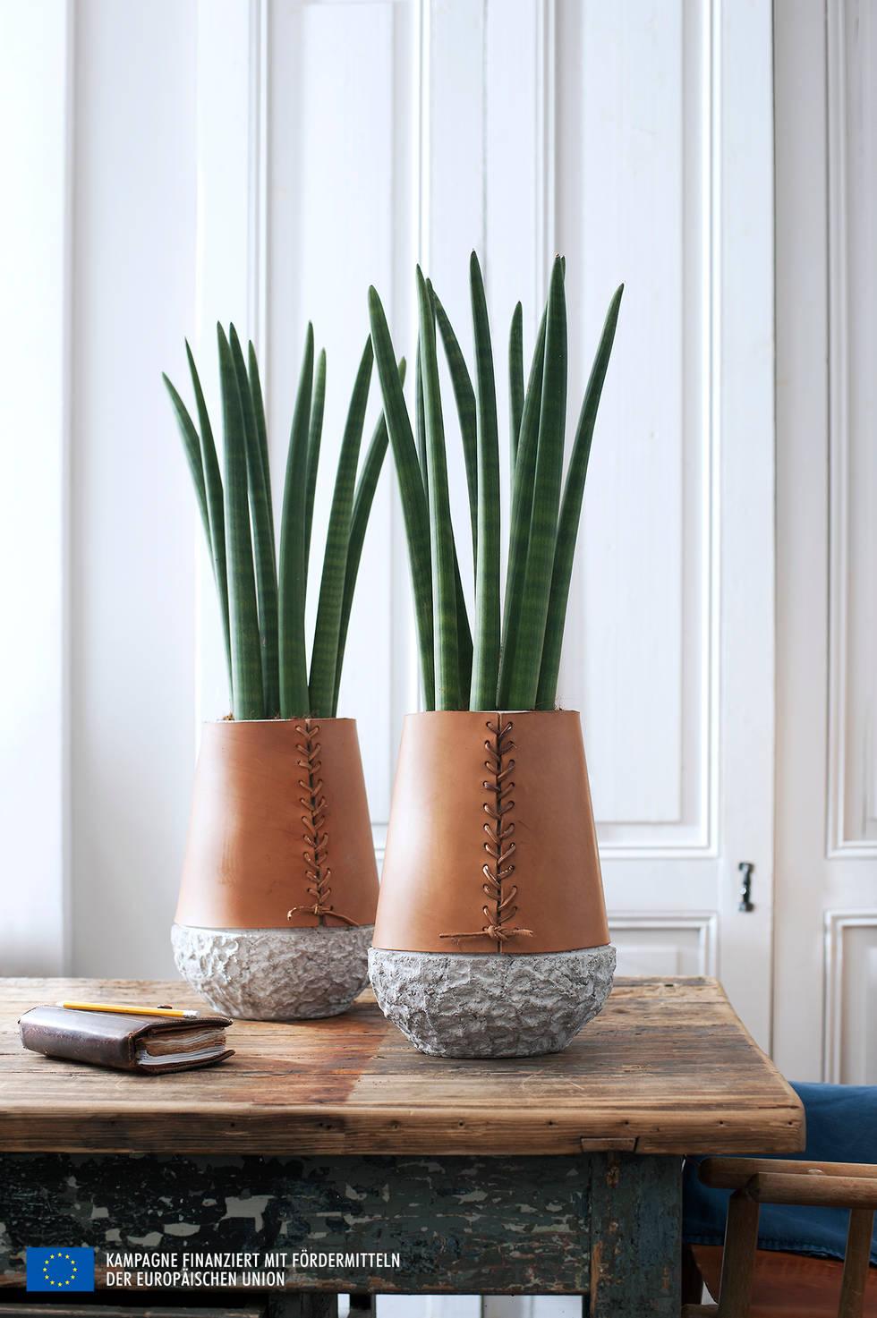 거실 분위기를 확 살려주는 완벽한 식물 10