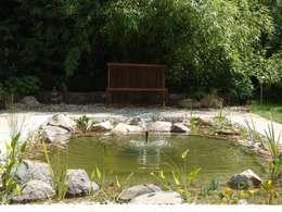 Vom swimmingpool zum gartenteich for Fische im naturteich