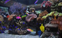 Гостиная в . Автор – Aquarium Architecture