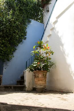 Plantas exóticas: Jardín de estilo  por Mikkael Kreis Architects