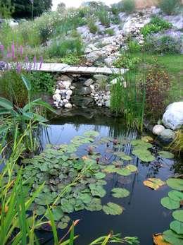 Bassin naturel: Maisons de style de style Moderne par Tangentes Architectes