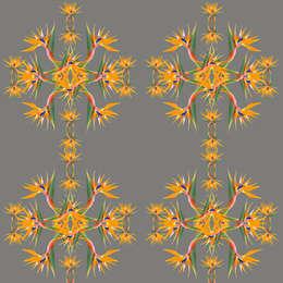 Murs & Sols de style de style Tropical par Lomas & Lomas