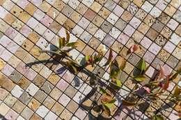 Mosaico Coral Mix:  Wände & Boden von homify