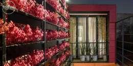 Estudio Coyoacan: Jardines de estilo moderno por Boutique de Arquitectura  (Sonotectura + Refaccionaria)