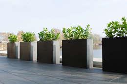Awesome Siepi Da Vaso Per Terrazzo Contemporary - Design and Ideas ...