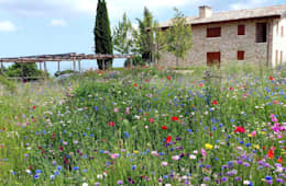 Сады в . Автор – Lucio Piunti