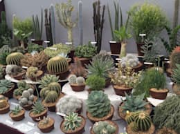 by Craig House Cacti