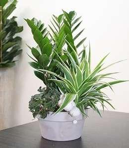 Le piante da interno che resistono senza la luce naturale for Piante da fioriera