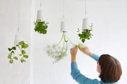 Interior landscaping by Greenbop